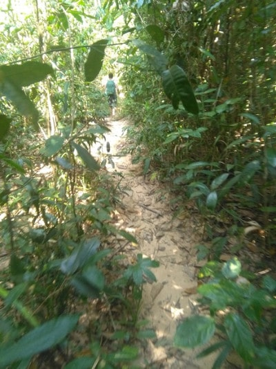 A man in the distance walking through thick rainforest on koh ta kiev island