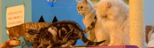 4 cats on a climber, 2 are eatign from a tin of tuna