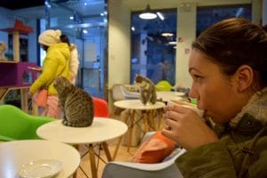 A lady drinking a hot drink inside a beijing cat cafe