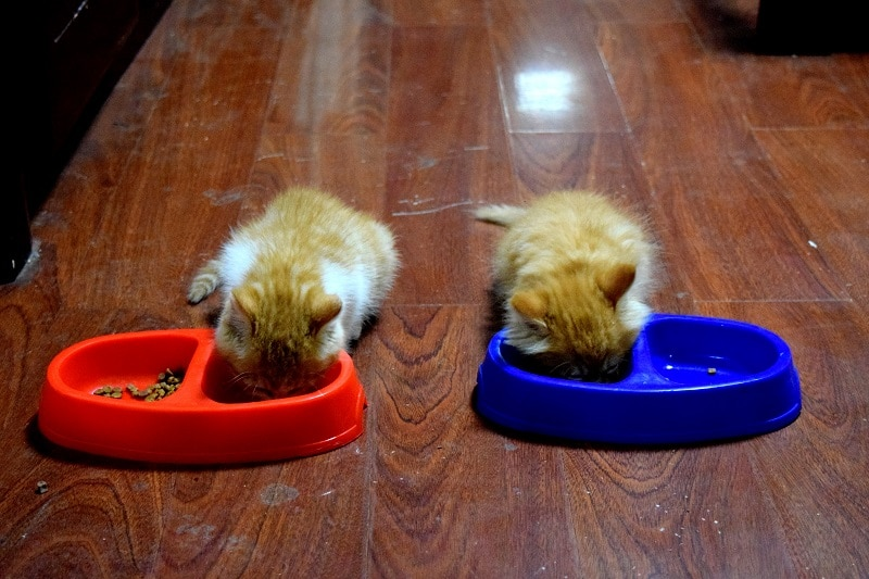 2 kittens eating out of bowl