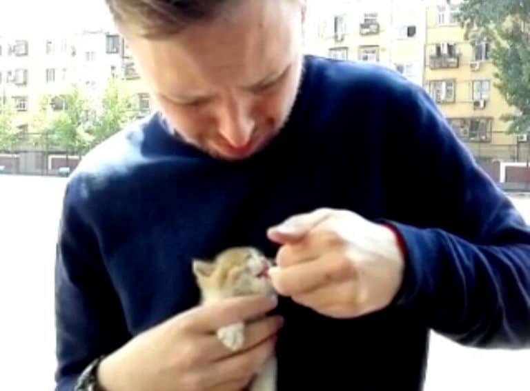A picture of a man feeding a small kitten