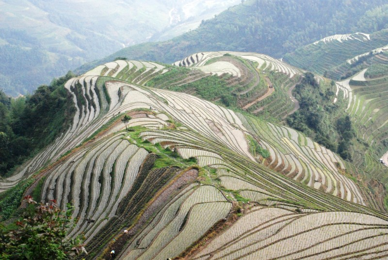 Green flooded rice terraces in the hills