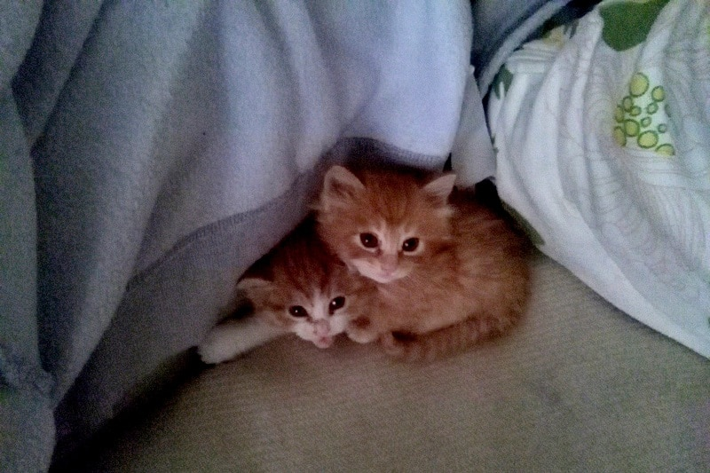 Two tiny kittens on top of each other
