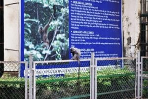 A monkey sitting outside one of the monkey enclosures