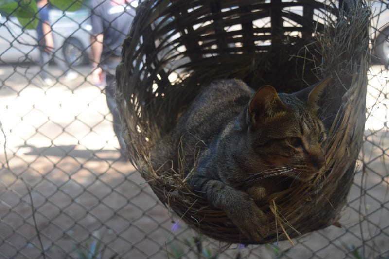 A cat in a small basket at elephant nature park