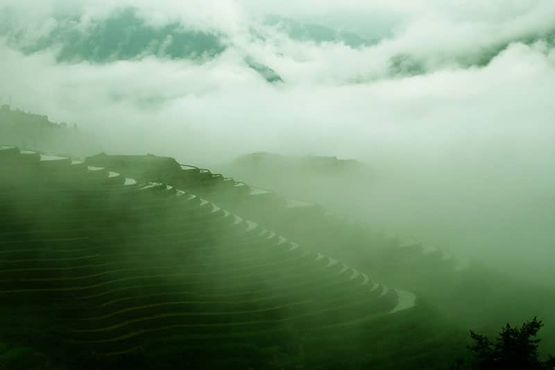 Rice terraces in the mountains of guilin shrouded in a light fog