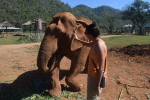 Girl stroking elephant with broken ankle elephant Nature Park Chiang Mai