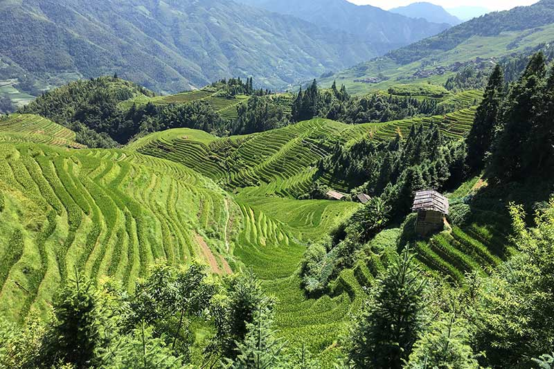 Going to these lush green rice paddies in the mountains is one of the best things to do in Guilin