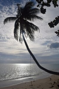 A palm tree with a rop swing hanging over the sea at the beach