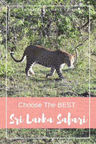 Are you going to Sri Lanka? Are you interested in incredible safaris? Read this guide to see how you can experience an amazing Sri Lanka Safari! Sri Lanka | Sri Lanka Safari | Safari | Wild Animals | #srilanka #safari #srilankasafari #wild #adventure