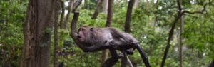 A very wet monkey looking very annoyed lying on a tree