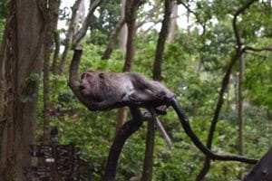 A monkey hanging around on a branch with wet fur