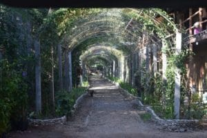 A tunnel of vines and flowers at elephant nature park