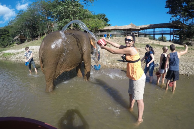 A lady throwing a bucket of water over an elephant in a river