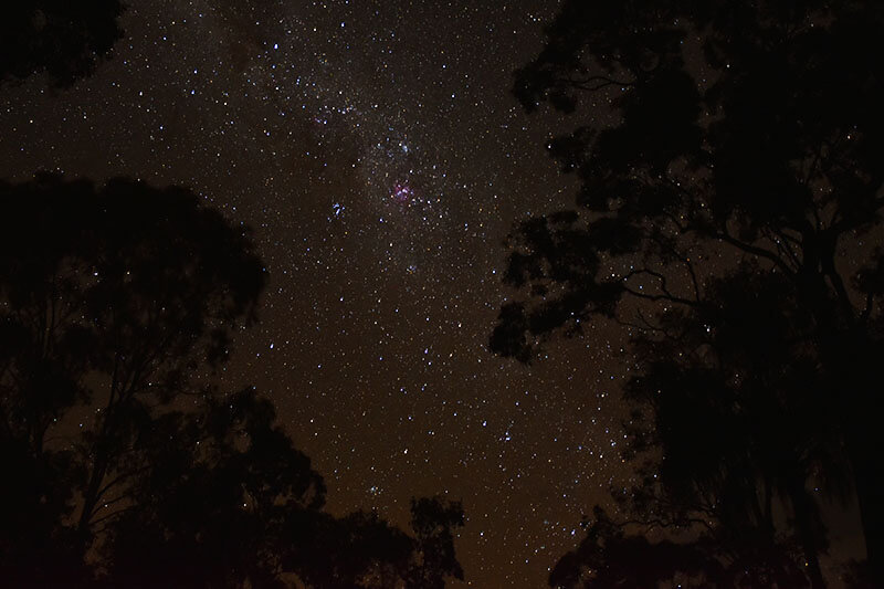 Australian Night Sky with trees in foreground and stars out