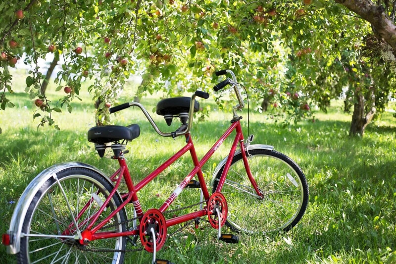 Red tandem bike in a green orchard
