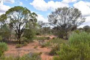 Some trees and shrubs in outback australia