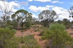 The outback near cobar