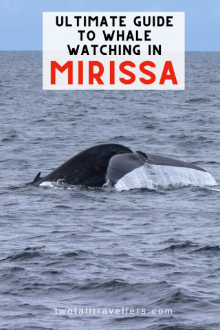 Rated one of the best places in the world to see the majestic blue whale, have a read to see your best options to go whale watching in Mirissa, Sri Lanka. Whale Watching | Sri Lanka | Sri Lanka Blue Whale | Blue Whale | Whale Wathcing Sri Lanka | Mirissa | #whalewatching #bluewhale #mirissa #srilanka #whalewathcingsrilanka #whalewatchingmirissa