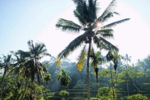 Palm trees and the jungle