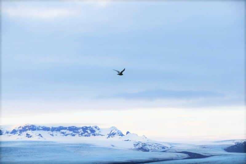 bird flying away in the distance over an icy lagoon