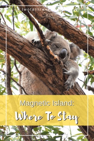 Koala in tree Pinterest Image