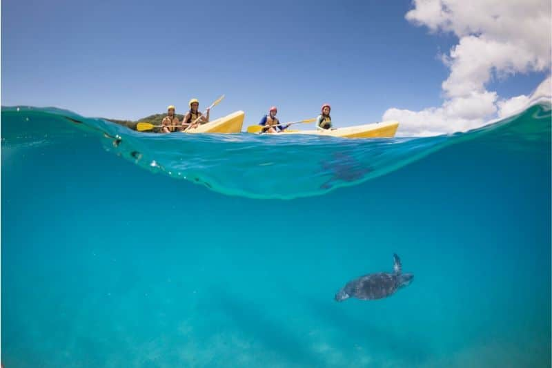 4 people kayaking in 2 yellow boats and a turtle swimming underneath