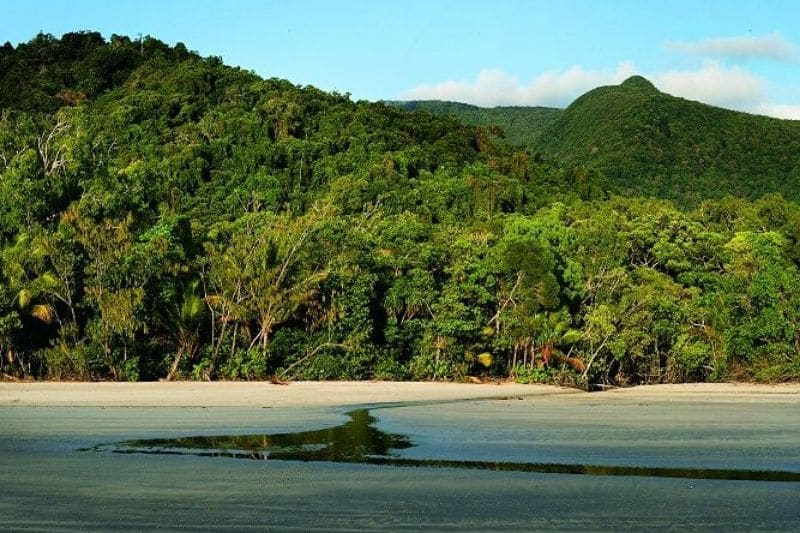 Green rainforest with sandy beach