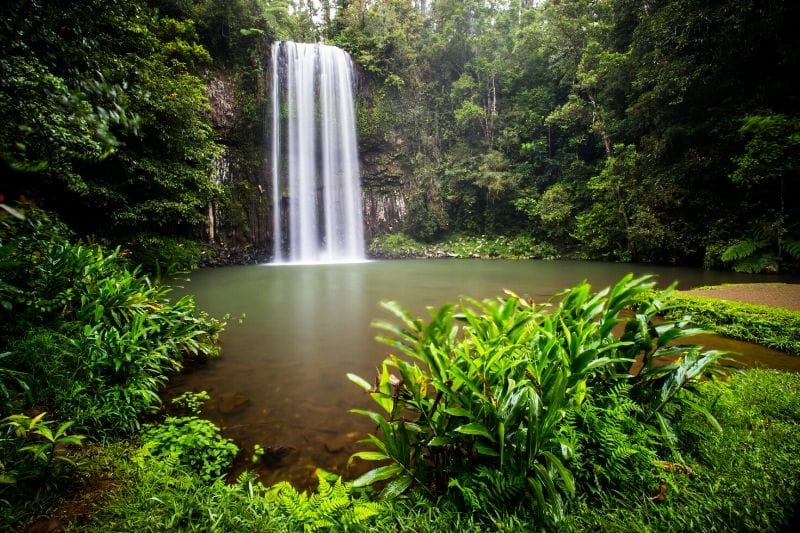 A large waterfall falling into a large pool in Australia. Accessible on a cairns tours