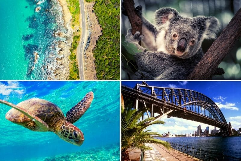 Sydney To Cairns Road Trip 4 images: aerial view of rainforest meeting ocean, koala, turtle underwater facing camera, harbour bridge in sydney